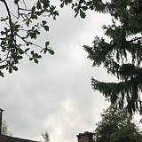 Savolainen sade
