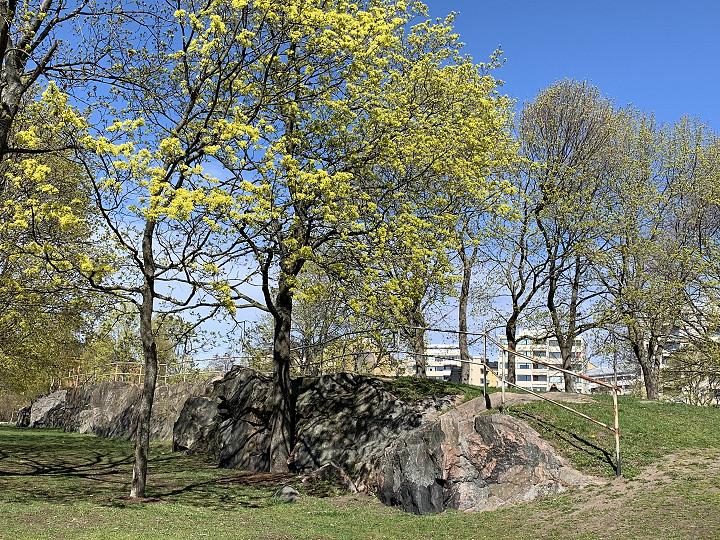 Kevättä Helsingissä
